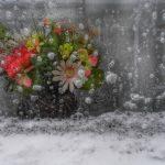 batch_Gabriela Huditeanu - Frozen Colors